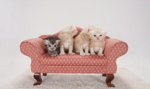 ソファーに乗った子猫達