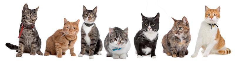 いろいろな種類の猫達