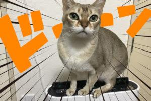 空気清浄機に乗る猫