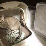 脱臭機の隣のシステムトイレ(デオトイレ)で、うんちをしようとしている猫