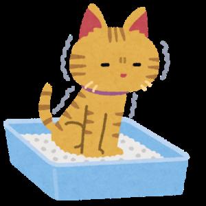 トイレでうんちをしている猫