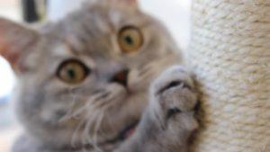 爪とぎタワーで爪とぎをしている猫